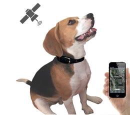 dog tracker collier traceur gps temps r el sans abonnement pour animaux. Black Bedroom Furniture Sets. Home Design Ideas